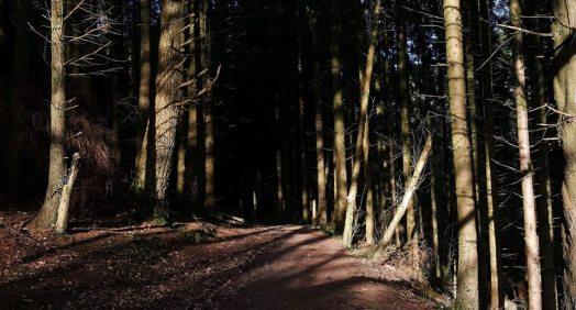 Stumilowy las półmilowy
